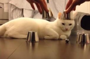 Kido, die klügste Katze der Welt