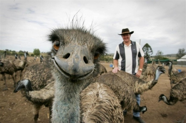 The Eager Emu.