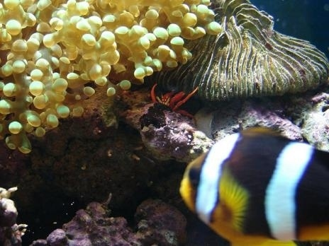 The Clowning Around Clown Fish.