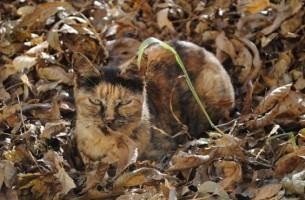 Täuschen, tarnen & verstecken – Camouflage im Tierreich