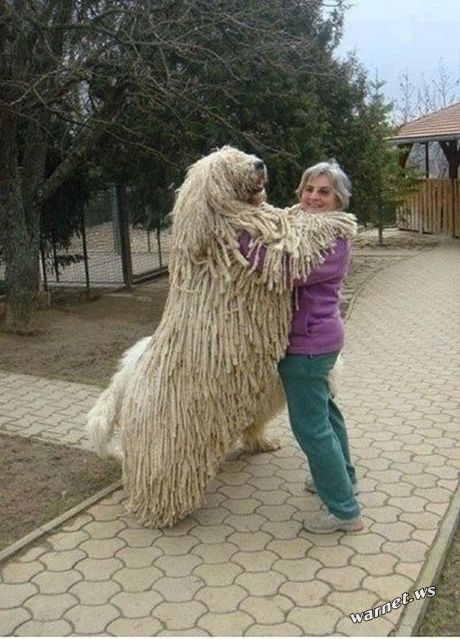 riesige-hunde (2)
