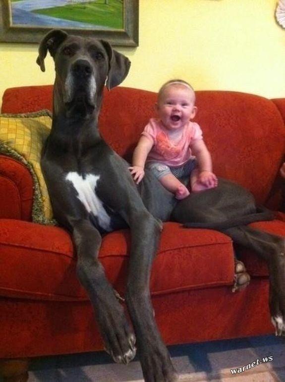 riesige-hunde (3)