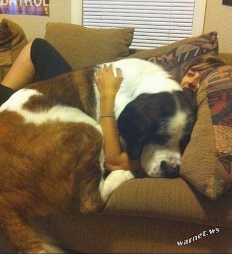 riesige-hunde (7)