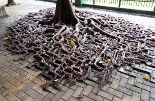 10 Bäume, die überall Wurzeln schlagen