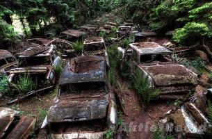 Der Oldtimer-Wald von Belgien