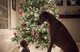 Vorsicht Knautschzone! Riesenhunde ganz sanft