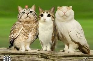 Katzeneule