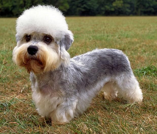 hund (1)