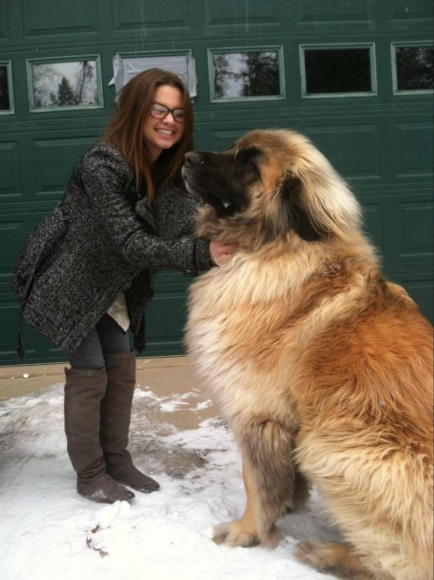 hund (16)
