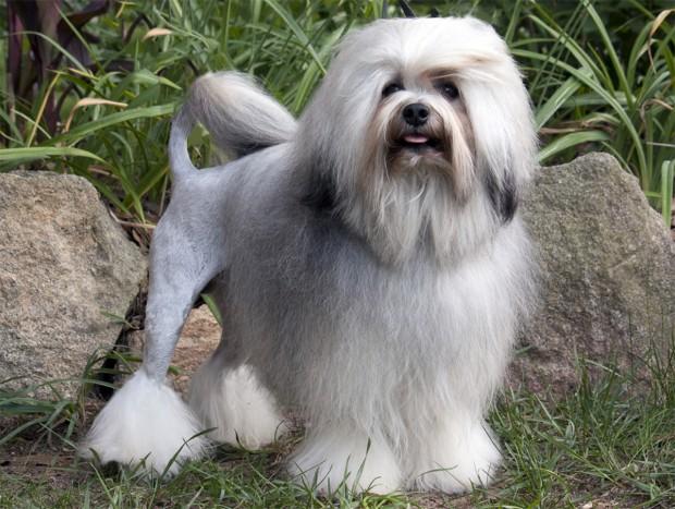 hund (19)