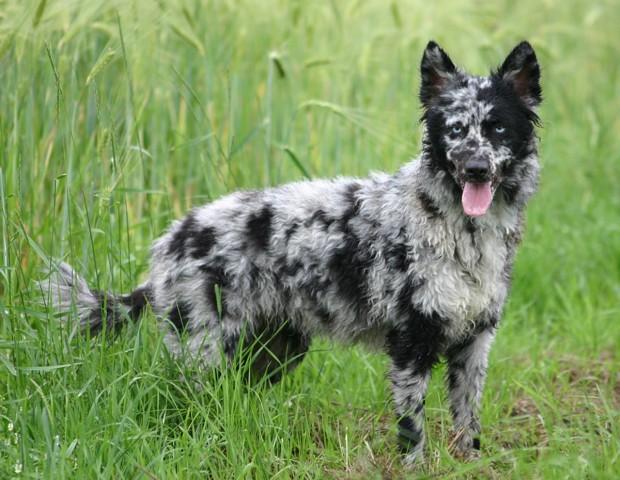 hund (32)