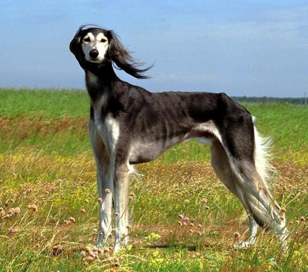 hund (43)