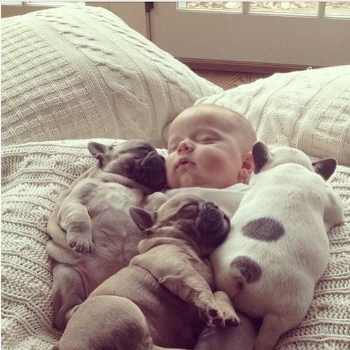hunde-schlafend (3)