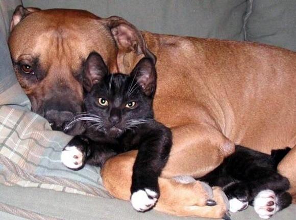 hunde-schlafend (5)