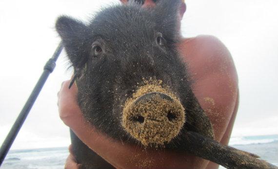 schwein (1)