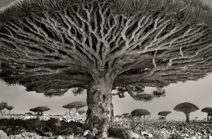 Bäume, die alles überdauern….