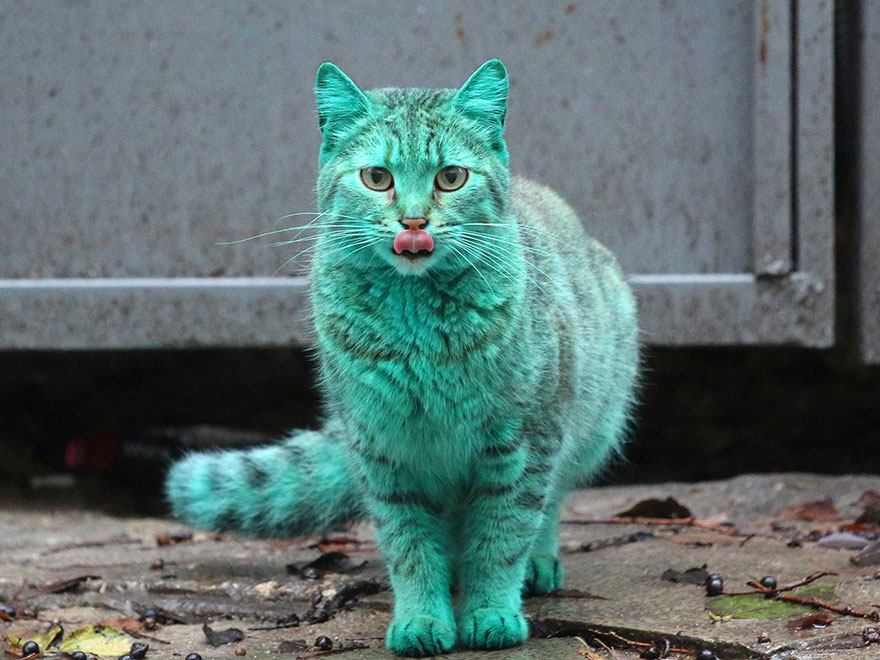 green-cat-varna-bulgaria-11