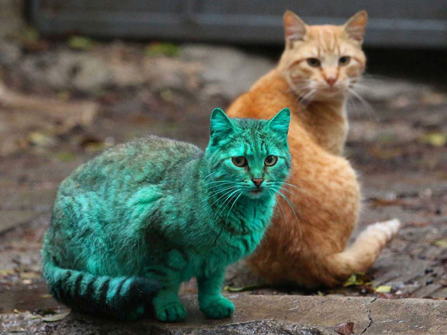 green-cat-varna-bulgaria-5