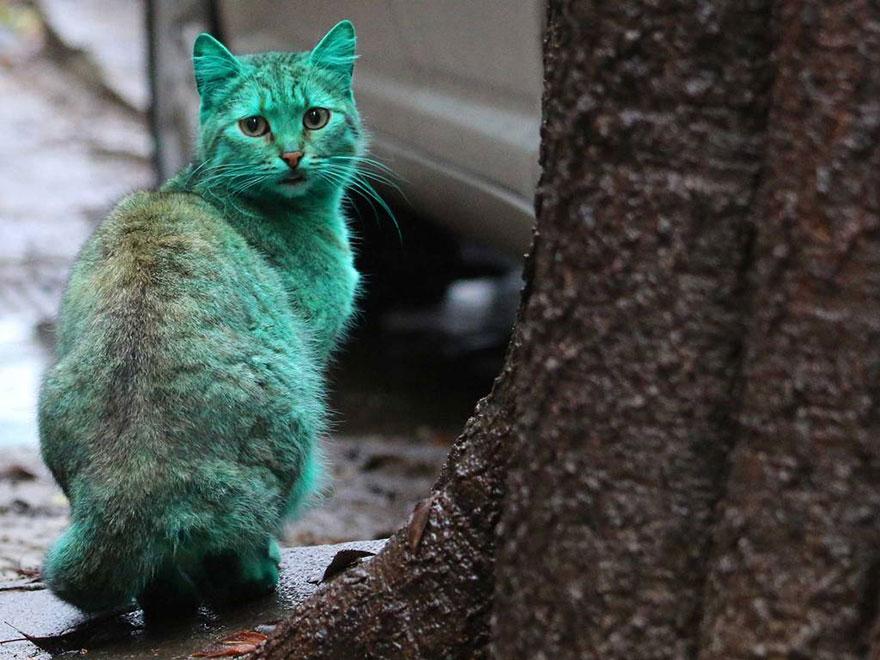 green-cat-varna-bulgaria-6