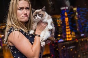 Diese Katze verdient mehr als Angelina Jolie & Brad Pitt – 100 Mio. $