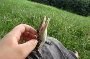 16 sehr süße Reptilien, die in eine Streichholzschachtel passen könnten….