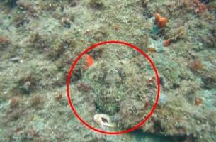 Das geheimnisvolle Kraken-Versteck!