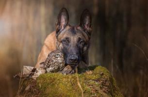 Hund & Eule in tiefer Freundschaft. Wie kann das sein?