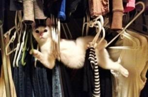 Meine Katze ist anders!