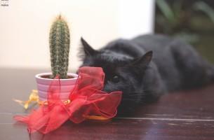 Unheilsbringer schwarze Katze? Blödsinn!