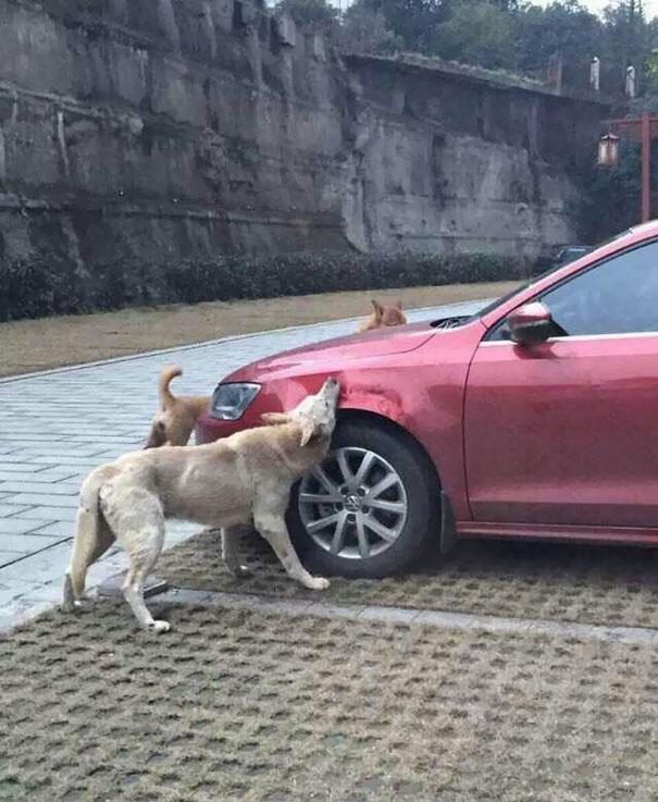 hund-auto (2)