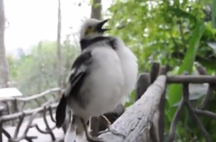 Mensch oder Vogel?