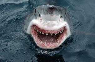 Wer sagt denn, Tiere könnten nicht lächeln? Manchmal lachen sie sich schlapp!