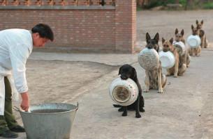 In China essen Sie Hunde! Polizeihunde ausgenommen?