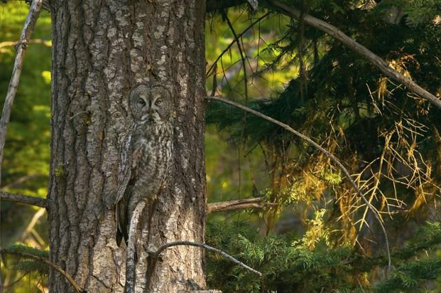 tiere-verstecken (4)