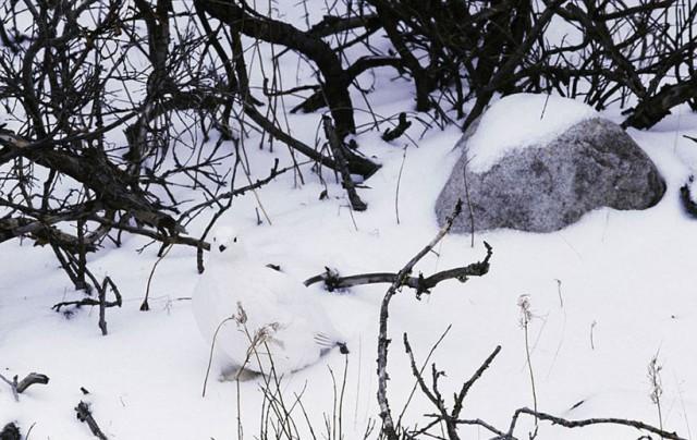tiere-verstecken (6)