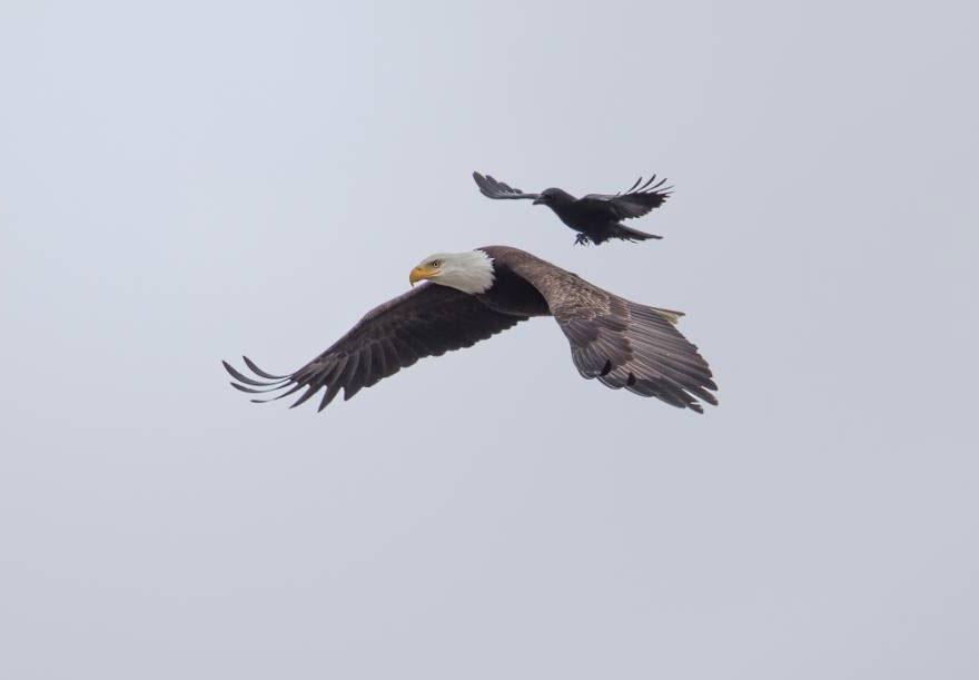 adler-fliegen (1)