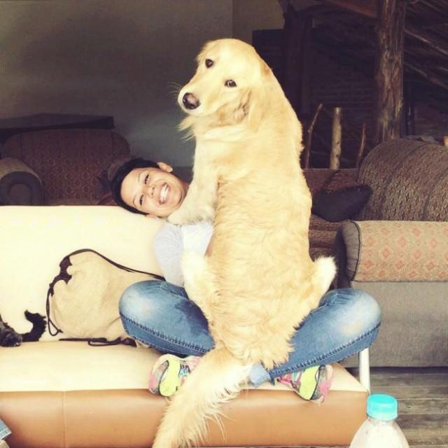 riesen-hunde (12)