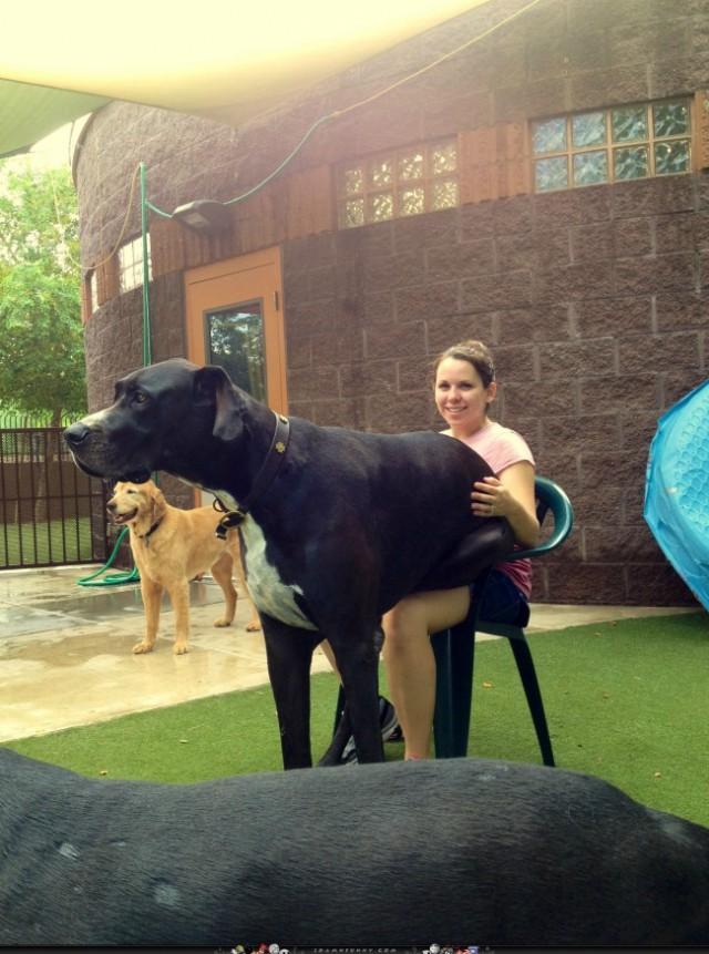 riesen-hunde (19)