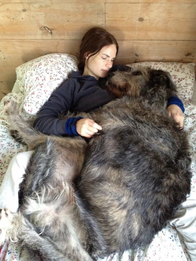 riesen-hunde (4)