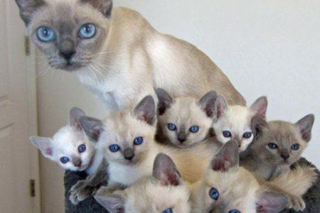 Katzen und ihre Mini-Kopien