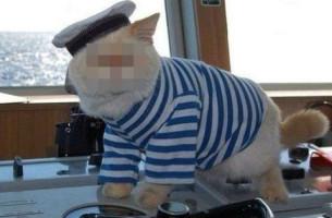 War es nicht der Kapitän, dann eben ´ne Katze