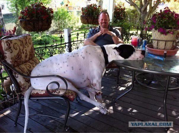 riesen-hunde (20)