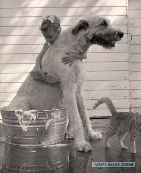 riesen-hunde (25)