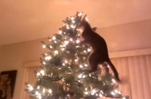 Katze vs. Weihnachtsbaum. Es kann kein gutes Ende nehmen…